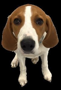 Dog Training Plains Pa